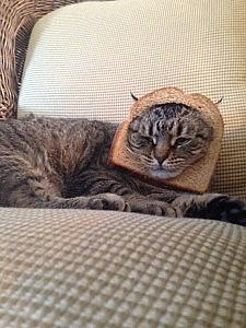 We breaded our cat. Thanks, Internet.