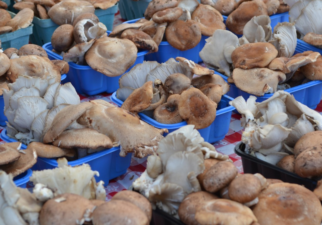 A table full of gorgeous mushrooms at the Red Bank Farmer's Market.